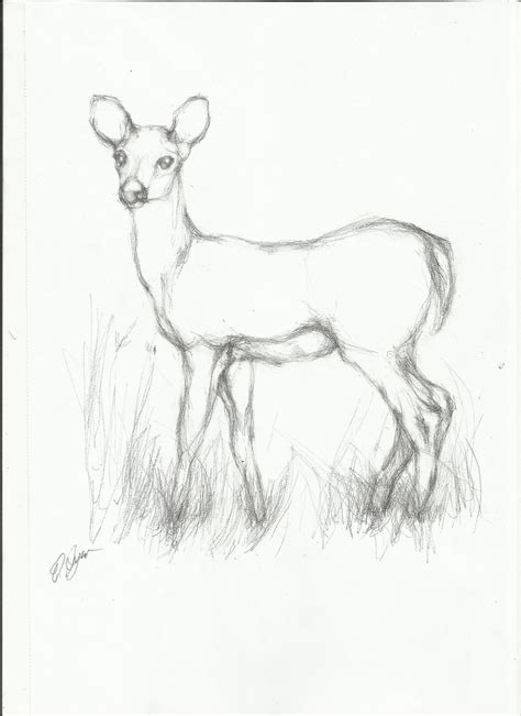 Sketches Simple by Simple Line Drawings Of Deer Search Charcoal
