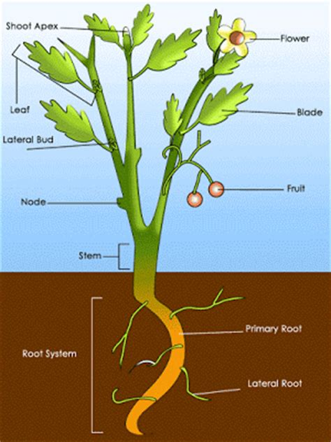 roots the most important part of your plant grow easy forestry learning parts of plants