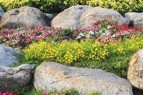 garten im mã rz pflanzen pflanzen zryd stein garten ag