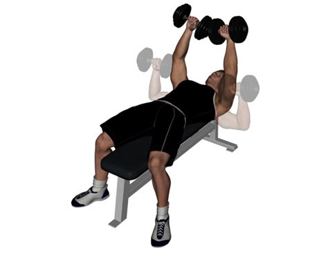 bench press db flat bench press with dumbbells images