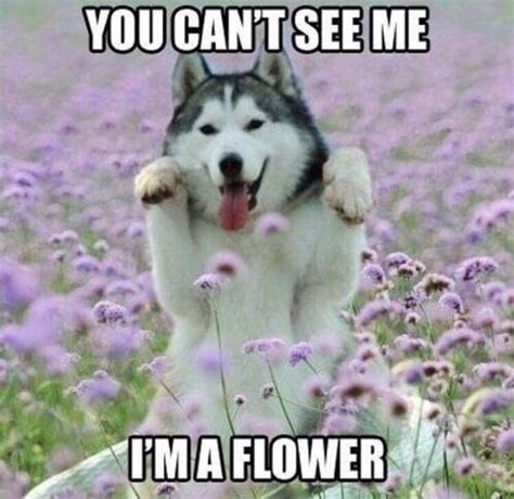 Funny Animal Meme - best 25 dog memes ideas on pinterest cute dog memes