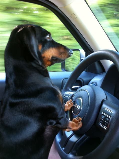 renovated cer would love to have pinterest dogs love cars on pinterest cars dogs and love