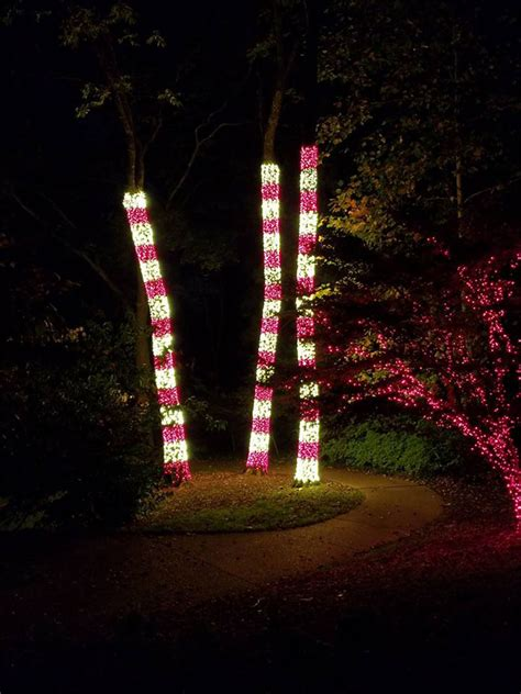 gallery tree wrap focal tree lighting nashville