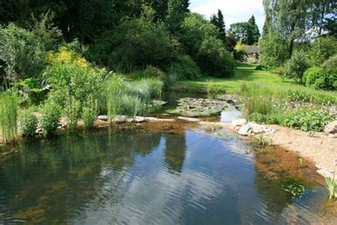 natural backyard pools natural pools can prove to be an excellent home update idea