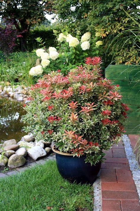 winterharte pflanzen für den garten die besten 17 ideen zu immergr 252 ner garten auf