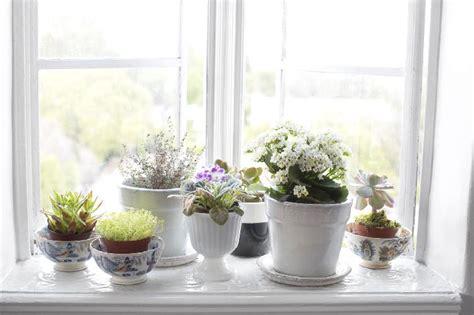 inspirasi dekorasi tanaman hijau  bunga  rumah