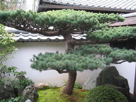 bonsai da giardino le piante da giardino giardinaggio piante per giardino