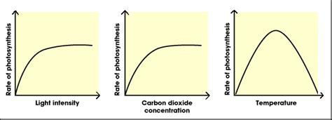 design experiment photosynthesis 2 9 photosynthesis sl hl 1 biology 5 ferguson