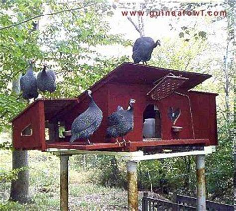 guinea fowl housing plans poultry housing for guinea fowl all about chickens pinterest deer house on