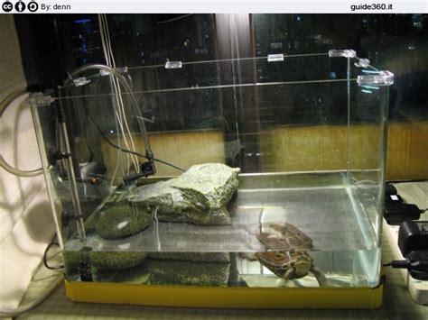vasca per tartarughe grandi costruire un acquario per tartarughe