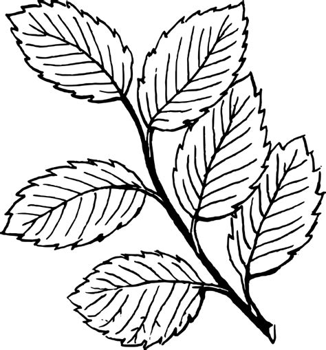 Leaf Coloring Page leaf coloring pages 2 coloring ville