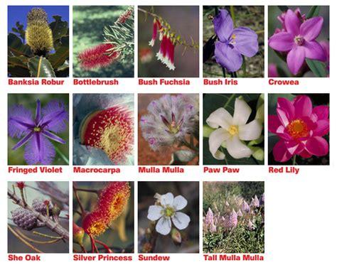 crowea fiori australiani travel essence fiori australiani essenza combianata