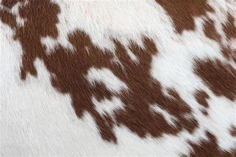 brown cowhide brown cowhide wall mural eazywallz