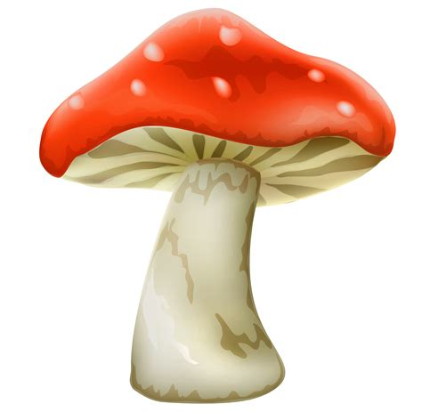Red mushroom with white dots png clipart best web clipart