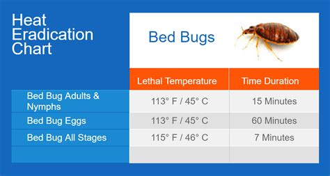 what temp kills bed bugs bed bugs thermapure
