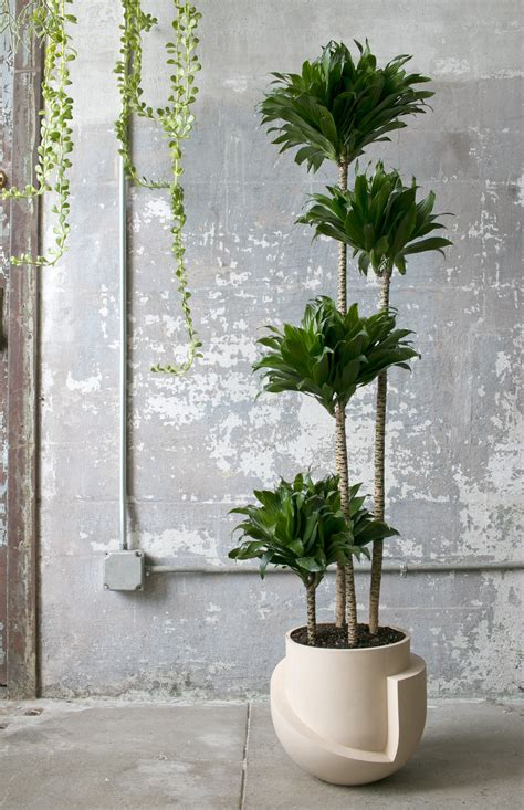 Indoor Floor Planters by Finally 20 Oversized Planters Worthy Of Your Fiddle Leaf