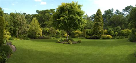 green tree landscaping tips for keeping your trees looking great hardys lawn tree