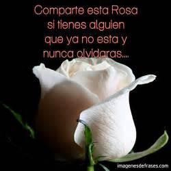 imagenes de rosas tristes con frases imagen de rosa imagenes de flores con frases tristes