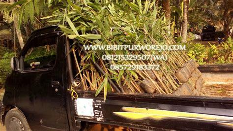 Jual Bibit Bambu Wulung jual bibit bambu petung murah harga proyek jual bibit