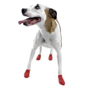 petsmart boots 17 best images about west highland terriers on costumes afro wigs and