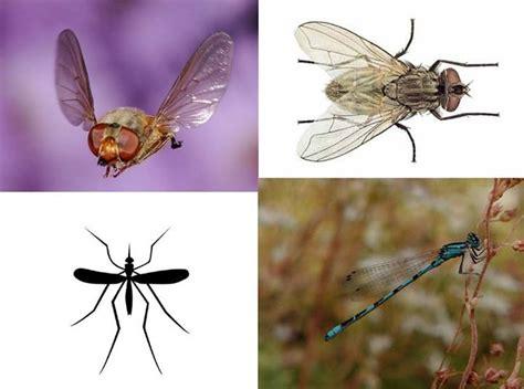imagenes animales que vuelan nombres de animales que vuelan imagui
