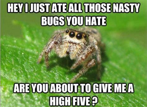 Cute Spider Memes - spider job