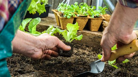 The Beginner?s Guide to Container Vegetable Gardening