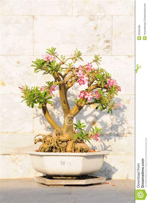 fancy shaped decorative tree royalty free stock photos