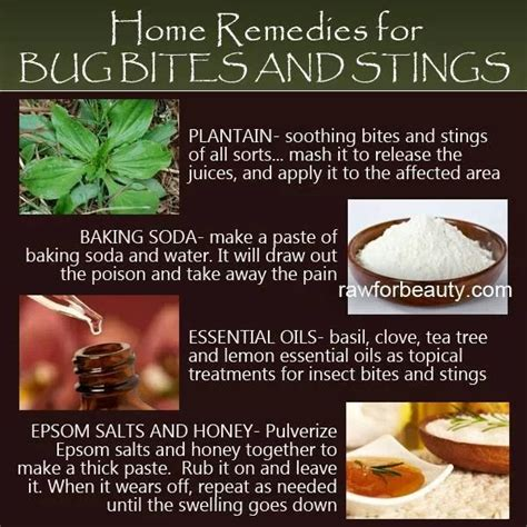 home remedies for bug bites dr s home remedies
