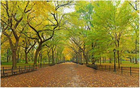 Landscape Park Definition Central Park Backgrounds Wallpaper Cave