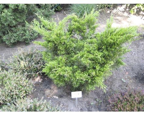 Bambus Pflanzen Sichtschutz 780 by Doppelstabmattenzaun 2 M Hoch Angebote G Nstig