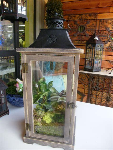 terrariums familytreenursery terrarium diy lanterns