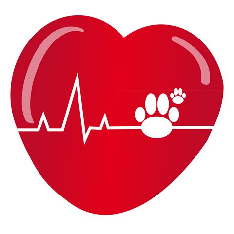 how can a live with heartworms how to protect your pets from heartworm disease arizona pet vet