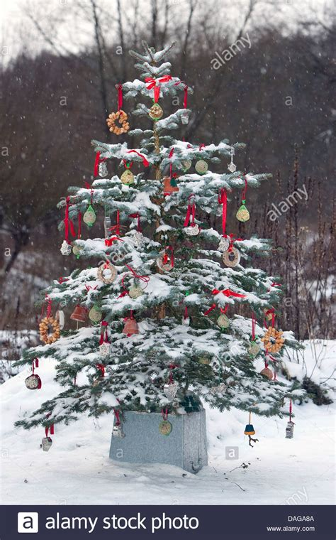 snow covered christmas tree 4ft tree in a snow covered garden adorned with balls for stock photo royalty free