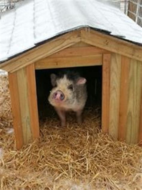 mini pot belly pig outdoor housing 1000 images about outdoor housing exles on