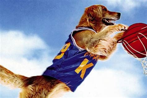 golden retriever air bud air bud came out 20 years ago so we tracked the director and made him explain
