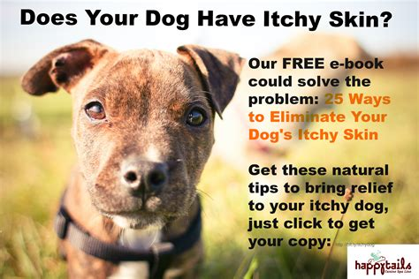 essential oils for itchy dogs similar posts