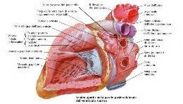 emorragia interna stomaco valvola aortica nuove tecniche alla clinica montevergine