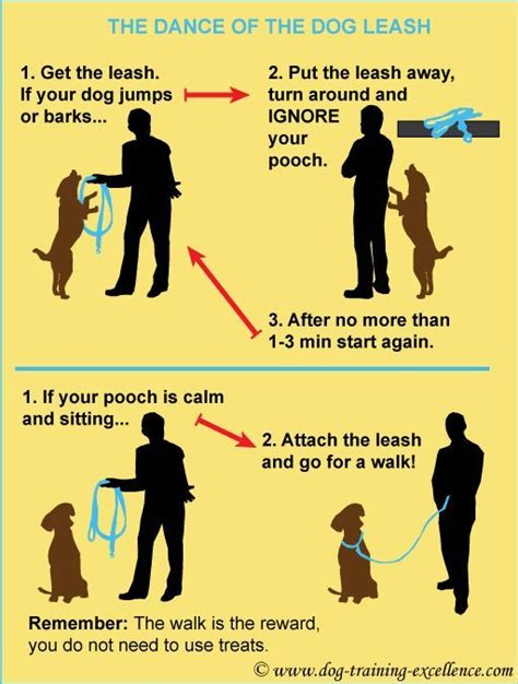 teaching a puppy to walk on a leash leash your of the leash