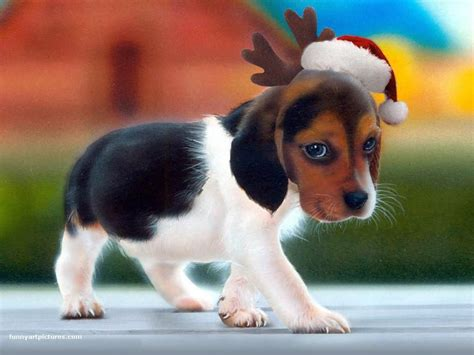 cute dog wallpapers for windows puppy christmas wallpapers wallpaper cave