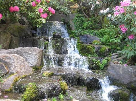 Springs Rhododendron Garden by Flower Picture Of Springs Rhododendron Garden