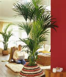 palme wohnzimmer die sch 246 nsten palmenarten living at home