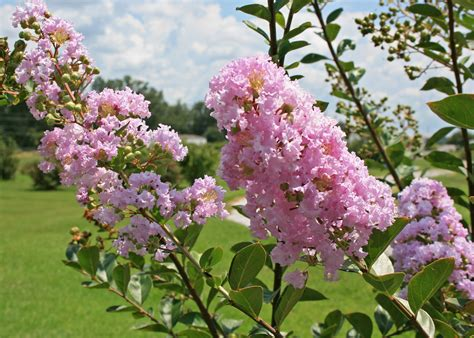Correct Pruning Allows Garden Plants To Thrive Garden Bushes With Flowers