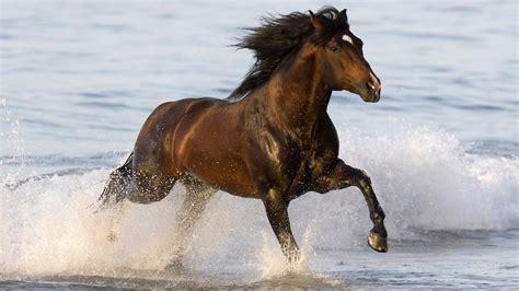 kuda lari
