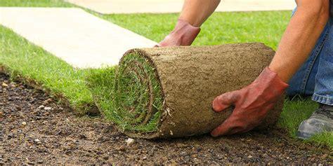 tappeto erboso in rotoli prato pronto in rotoli invernizzi tappeti erbosi di