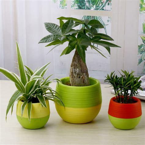 mini pot bunga hias kaktus tanaman  pcs multi color