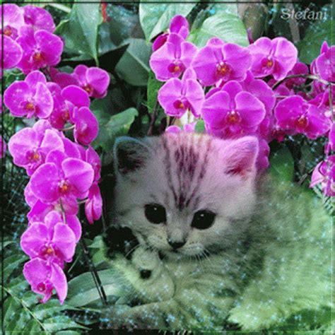 imagenes lindas gif im 225 genes de rosas animadas im 225 genes de amor lindas