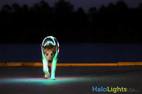 lights reviews halo lights led collars product review