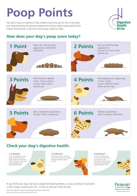 dog poop chart printable