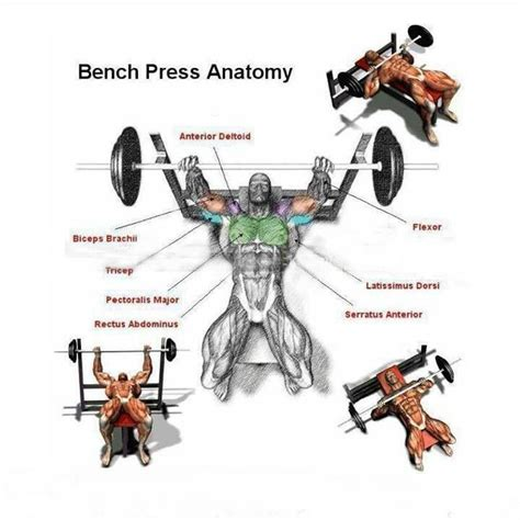what does bench pressing work out what does bench pressing work out 28 images work it